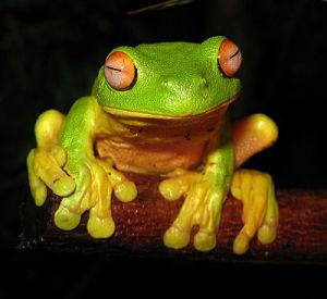 2009.06.08.treefrog