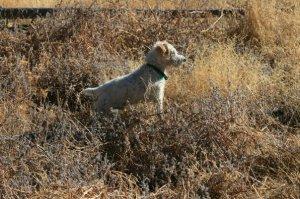 Mr pish field and stream pose yellowstone 102108