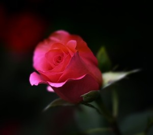 """""""That which we call a rose by any other name would smell as sweet.""""  That is a classic of course from the Bard, but how true is it?"""