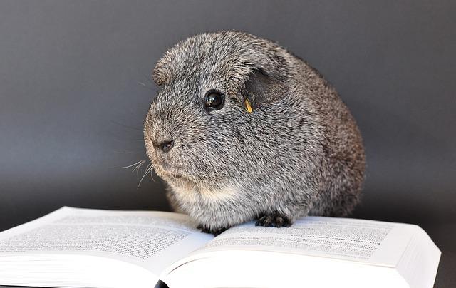 discount print book guinea-pig