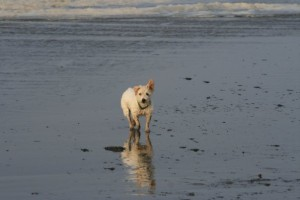 Mr Pish at Ocean Shores WA Oct 2008