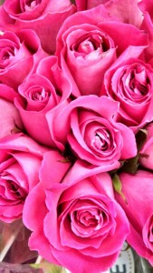 pink roses Flash Fiction writing prompt copyright KS Brooks