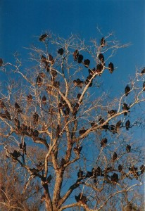 flash fiction writing prompt deleon vultures 1998