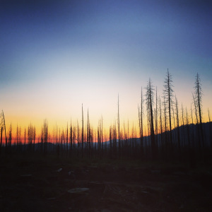 sun setting behind burned out trees