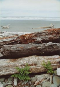 south beach olympic national park washington june 2001 flash fiction writing prompt copyright KS Brooks