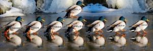 in writing, keep your DUCKS IN A ROW
