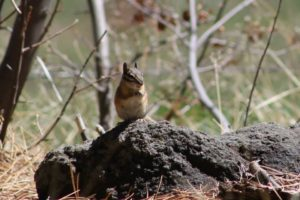 2014 May Day 2 Rest Area Chipmunk Flash Fiction Prompt