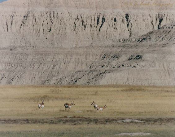 flash fiction prompt pronghorns copyright KS Brooks sm