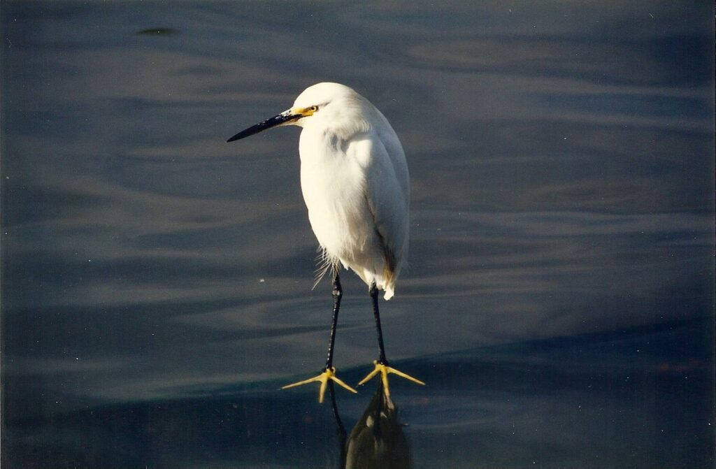 flash fiction writing prompt walk on water heron new orleans 1999
