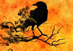 raven on a tree branch courtesy of pixabay