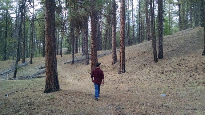 man walking in ponderosa pines
