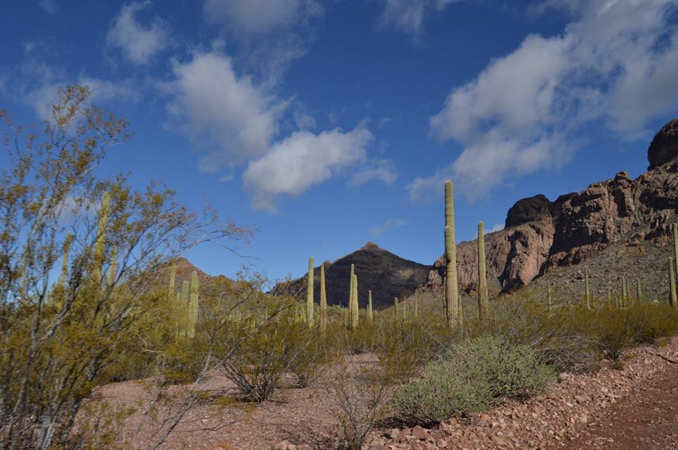 sky and cactus and mountains flash fiction writing prompt