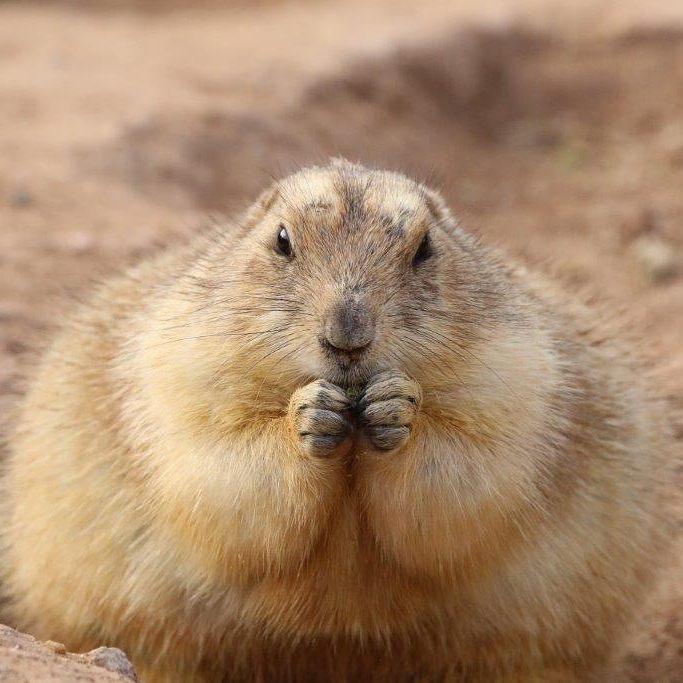 marmot flash fiction writing prompt k s brooks
